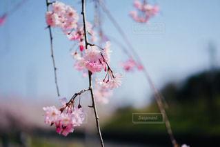 近くの花のアップの写真・画像素材[1207688]