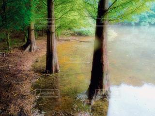 森を流れる川の写真・画像素材[1227822]