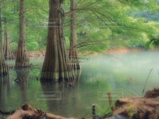 水の体の横にあるツリーの写真・画像素材[1227823]