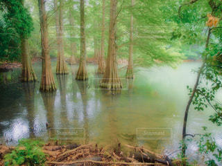 木々 に囲まれた水の体の写真・画像素材[1227824]