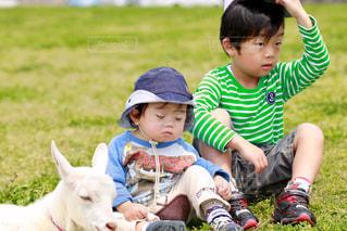 芝生に座っている小さな男の子の写真・画像素材[1242086]