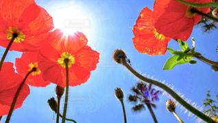 木からぶら下がっている赤い花の写真・画像素材[1277388]