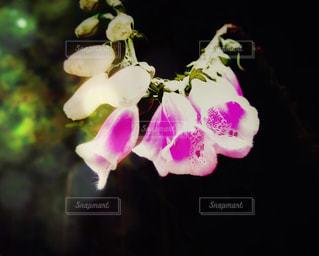 近くの花のアップの写真・画像素材[1320876]