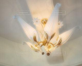 近くの花のアップの写真・画像素材[1324316]