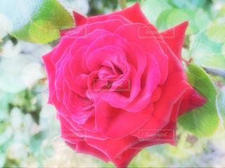 近くの花のアップの写真・画像素材[1324317]