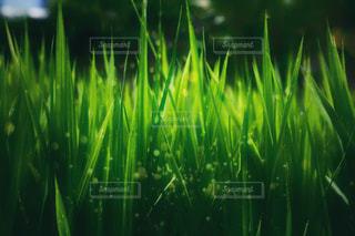 近くにいくつかの草のアップの写真・画像素材[1454316]