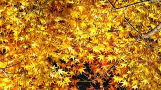 近くの木のアップの写真・画像素材[1465025]