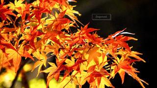 植物の花と木の写真・画像素材[1465026]