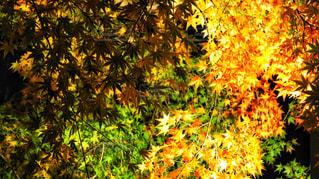 植物の花と木の写真・画像素材[1465038]