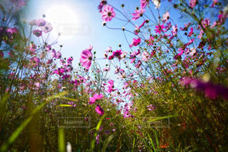 カラフルな花の植物の写真・画像素材[1585578]