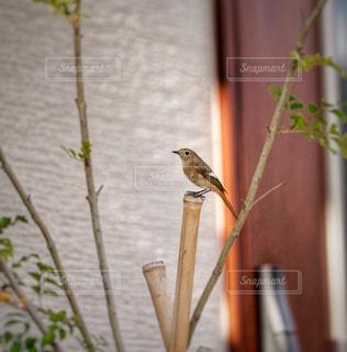 植物の上に座っている鳥の写真・画像素材[1615268]