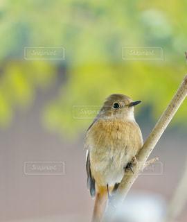 小さな鳥が枝に腰掛けの写真・画像素材[1635206]