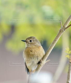 小さな鳥が枝に腰掛けの写真・画像素材[1635207]