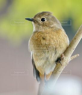 小鳥が枝の上に座っての写真・画像素材[1635209]