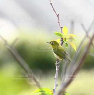木の枝にとまる小鳥の写真・画像素材[1636625]