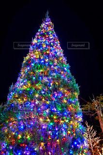 クリスマスツリーの写真・画像素材[1649538]
