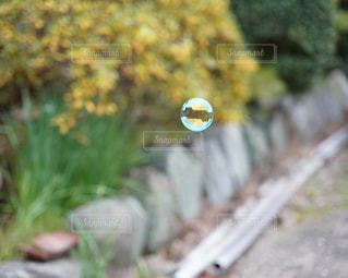 クローズ アップ庭園のの写真・画像素材[1709874]