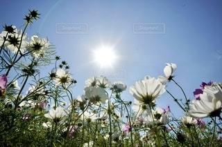 植物の花瓶の写真・画像素材[2699179]