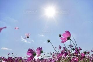 紫色の花で満たされた花瓶の写真・画像素材[2699180]