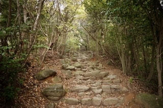 森の中の木の写真・画像素材[2699198]