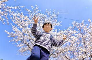 木の隣に立っている少年の写真・画像素材[2811252]