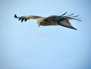 猛禽類の写真・画像素材[2820506]