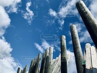 木のクローズアップの写真・画像素材[3376102]
