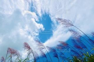 曇りの日にヤシの木のグループの写真・画像素材[3377160]