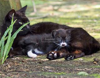 黒猫の写真・画像素材[4465938]