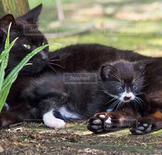 黒猫親子の写真・画像素材[4465943]
