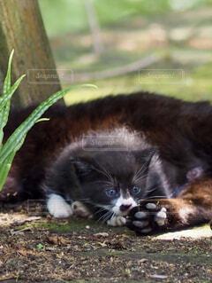 黒猫子猫の写真・画像素材[4465944]