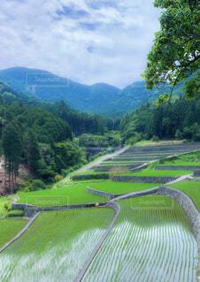 竹の棚田の写真・画像素材[4578224]