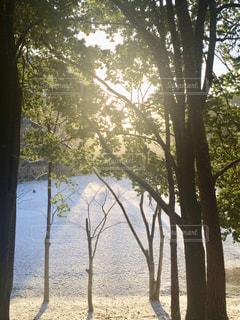 近くの木のアップの写真・画像素材[1118056]