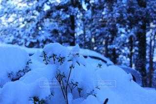 雪景色の写真・画像素材[1117630]