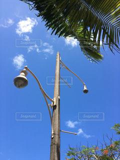 青空の下のヤシの木と歩道のライトの写真・画像素材[1118458]