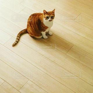 床に座っている猫の写真・画像素材[1118519]