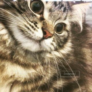 近くに猫のアップの写真・画像素材[1152375]