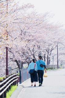 桜並木の下をデートするカップルの写真・画像素材[1119874]