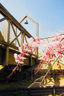 枝垂れ桜と幸せの鐘の写真・画像素材[1119886]