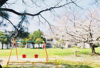 春の公園の写真・画像素材[1119905]
