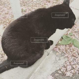 猫の写真・画像素材[12677]
