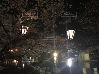 夜桜と錦帯橋の写真・画像素材[1118704]