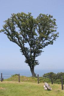 フィールドの大木の写真・画像素材[1125811]