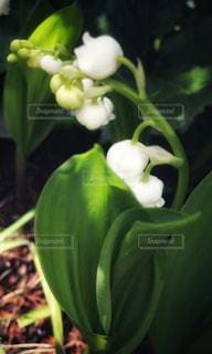 近くの緑の植物をの写真・画像素材[1127087]