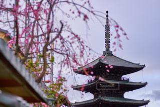 八坂の塔の写真・画像素材[1119519]