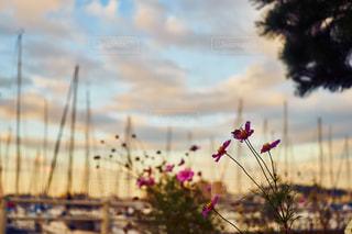 江ノ島ヨットハーバーの写真・画像素材[1120714]
