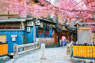 京都 祇園白川の写真・画像素材[1121644]