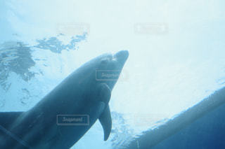 イルカの写真・画像素材[1285053]