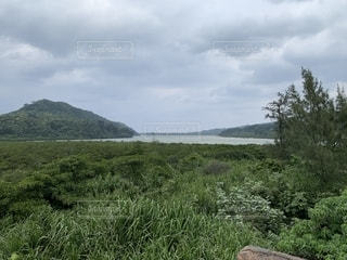 大自然のマングローブの写真・画像素材[1759254]