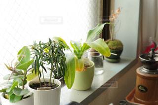 テーブルの上の花瓶の写真・画像素材[2279357]
